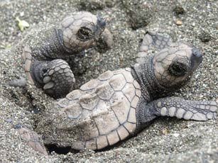 baby_turtles
